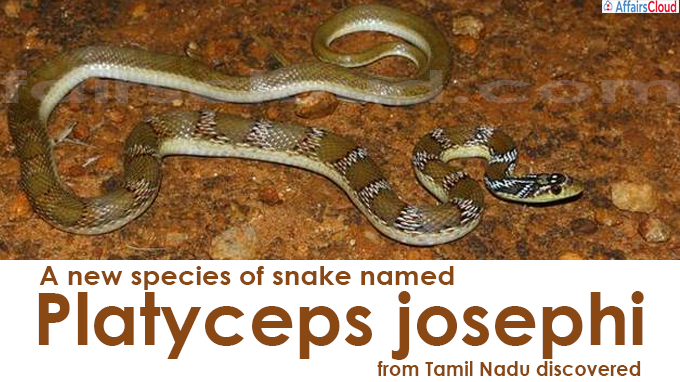 A new species of snake named Platyceps josephi from Tamil Nadu discovered