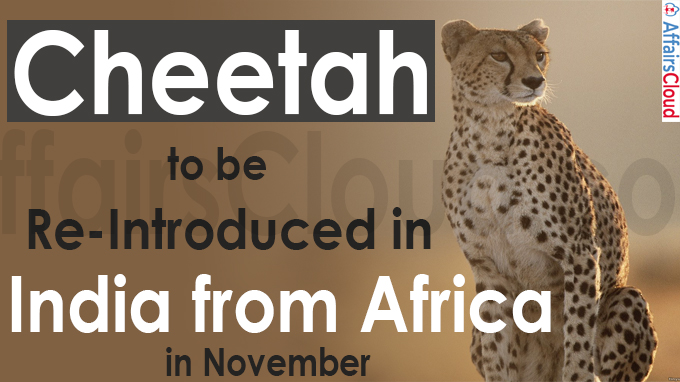 Cheetah to be re-introduced in India from Africa in November