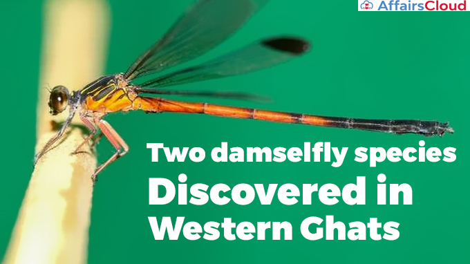 Two-damselfly-species-discovered-in-Western-Ghats