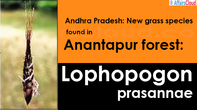 New grass species found in Anantapur forest