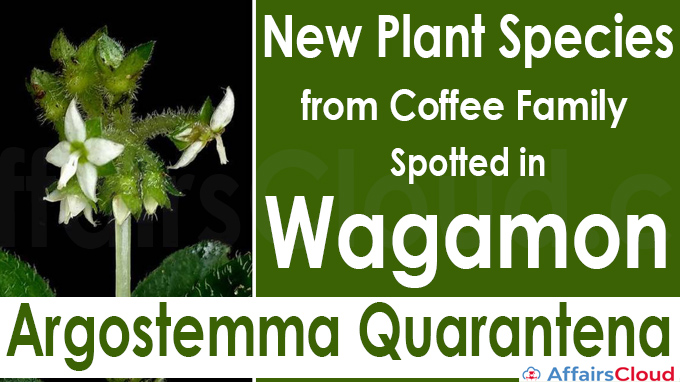 New plant species from coffee family spotted in Wagamon