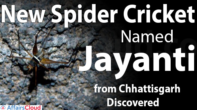 New spider cricket named Jayanti from Chhattisgarh discovered