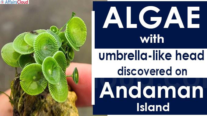 Algae with umbrella-like head, discovered on Andaman Island