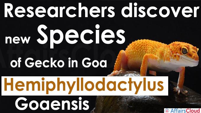 Researchers discover new species of gecko in Goa Hemiphyllodactylus goaensis