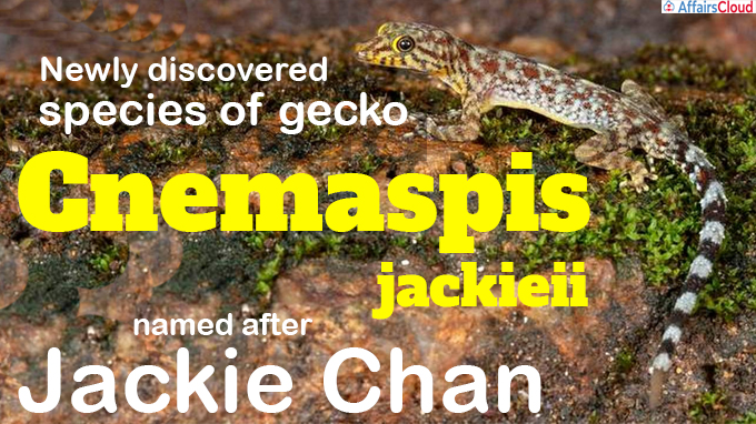 Newly discovered species of gecko named after Jackie Chan