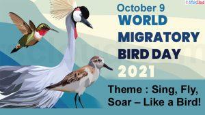 World Migratory bird copy